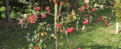 Taking Care of Business … Caring for the Lisia Gold Cider Orchard