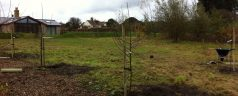 The Beginnings Of A New Cider Orchard @ Chez Tostevin